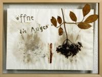 1997, Holunderpressung u. Papierschnitt, 42 x 31 cm